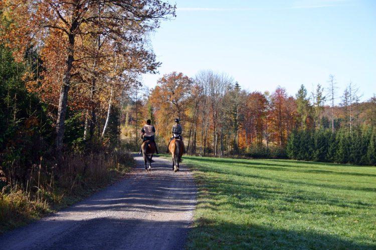 Ausreiten - Tipps zum Reiten im Gelände