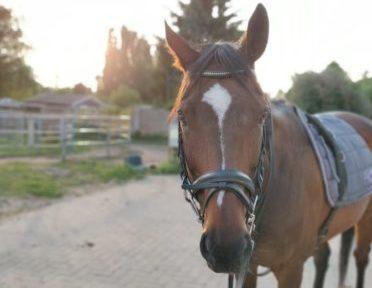 pferde-tipps